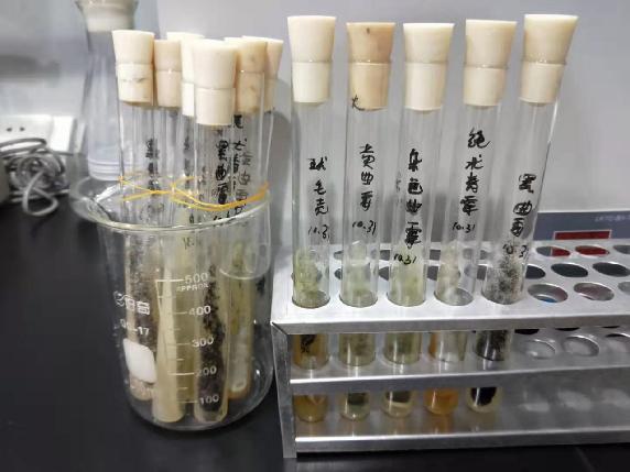 怎样验证产品的防霉效果?-抗菌剂/防霉剂/干燥剂/防霉片厂家批发